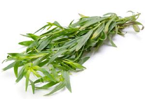 Estragon (Artemisia dracunculus) Bienfaits, propriétés, précautions