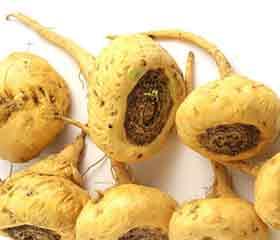 Maca <em>(Lepidium meyenii)</em>