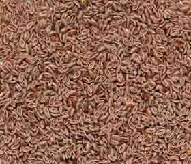 Psyllium <i>(Plantago afra – P. psyllium)</i>