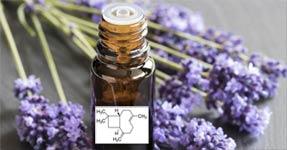 Une molécule présente dans certaines huiles essentielles améliore la cicatrisation des plaies
